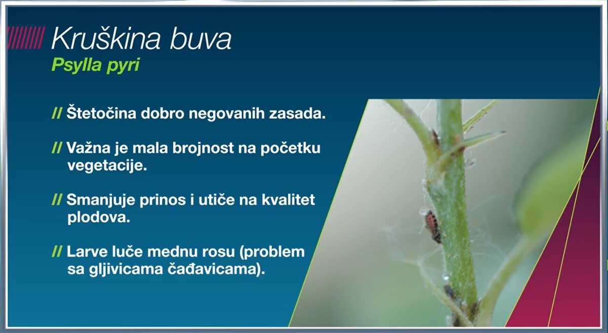 Agrosaveti Bayer Movento kruskina buva 02
