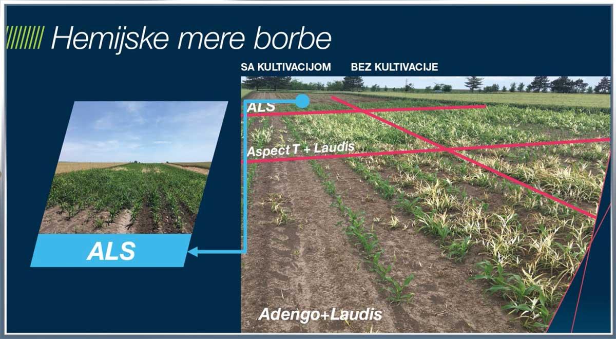 Agrosaveti Bayer rezistentnost korova ALS 04