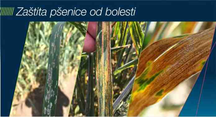 Agrosaveti Bayer zastita psenice Falcon Forte 01