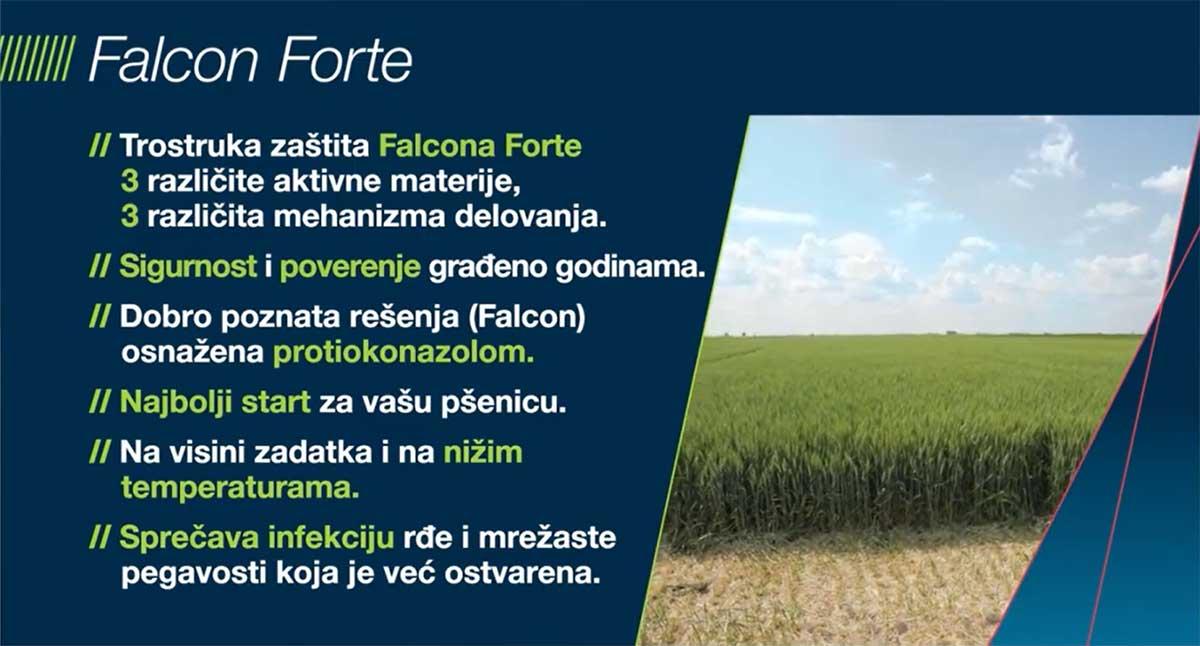 Agrosaveti Bayer zastita psenice Falcon Forte 03