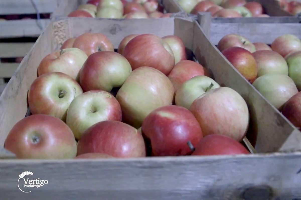 Agrosaveti proizvodnja jabuke i zove 01