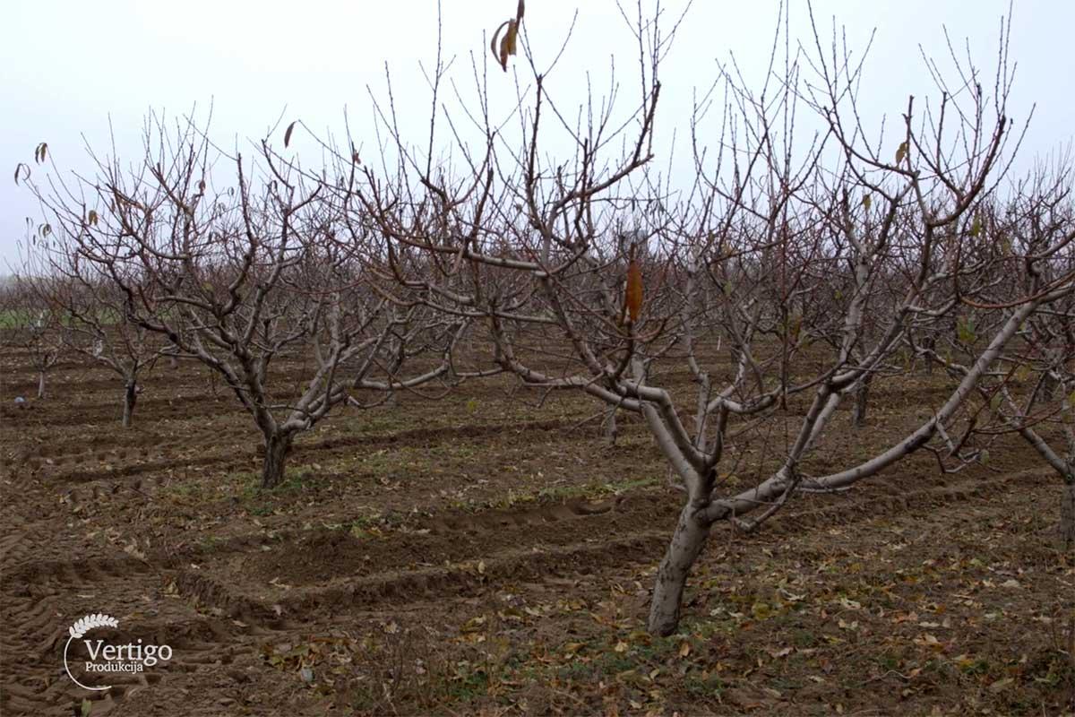 Agrosaveti proizvodnja jabuke i zove 04
