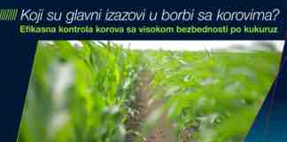 Agrosaveti Bayer borba sa korovima kukuruz Adengo 03