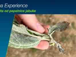 Agrosaveti Bayer pepelnica jabuke Luna Experience 01