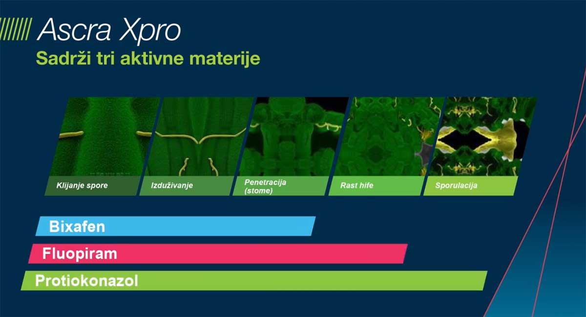 Agrosaveti Bayer zastita lista zastavicara psenica ASCRA Xpro 02