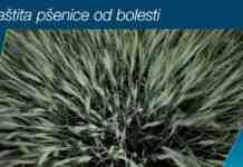Agrosaveti Bayer zastita psenice Delaro 01
