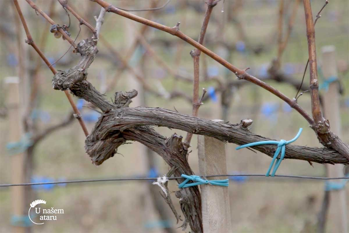 Agrosaveti organska proizvodnja grozdja i vina 01