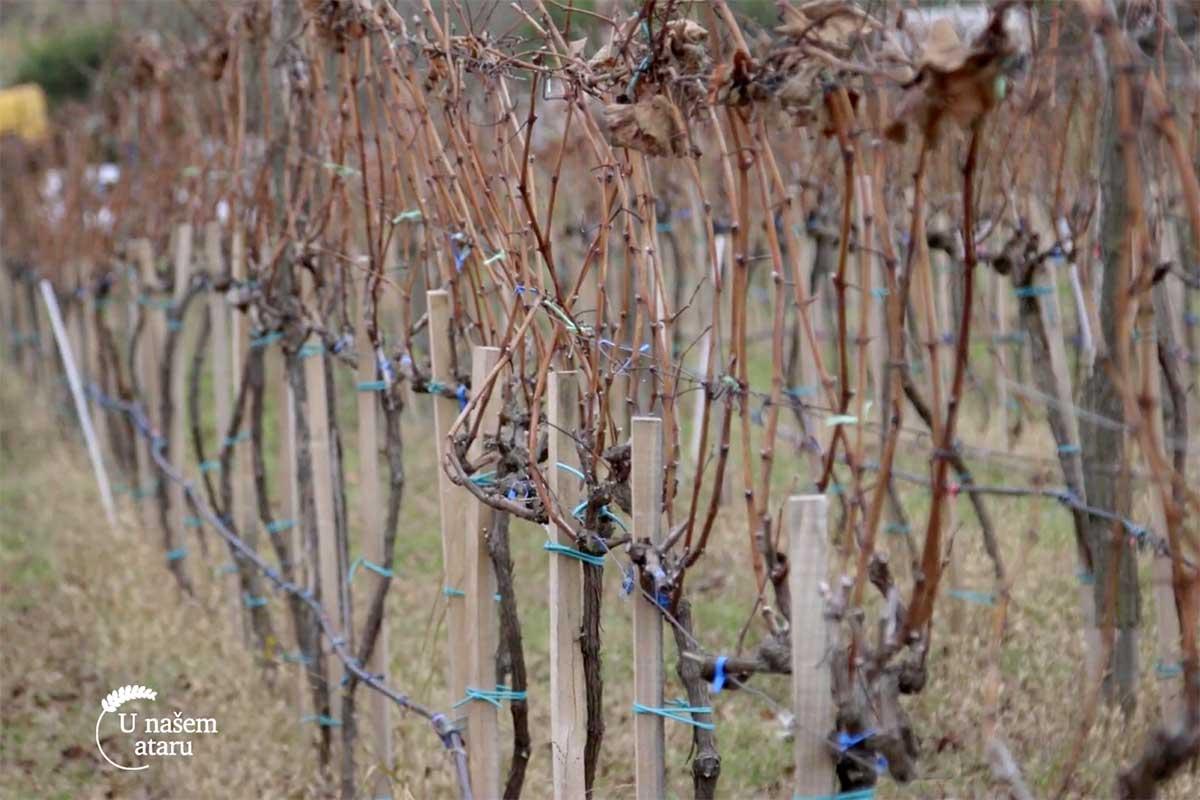 Agrosaveti organska proizvodnja grozdja i vina 02