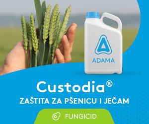 Custodia 300x250