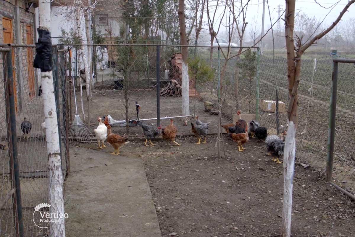 Agrosaveti farma Banatskog golosijana Kikinda 03