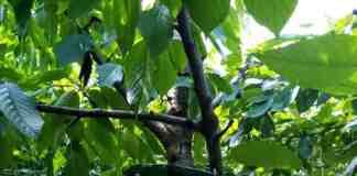 Agrosaveti klopka za azijske vocne mosice
