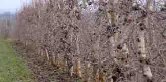 Agrosaveti proizvodnja voca Kamendol 03