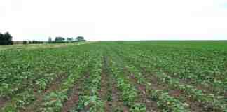 Agrosaveti Corteva Viballa suncokret herbicid 01