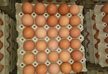 Agrosaveti cena jaja 02