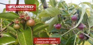 Agrosaveti galenika fitofarmacija furioso kruskina buva 01