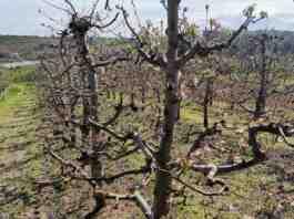 Agrosaveti najavljene padavine jabuka 01