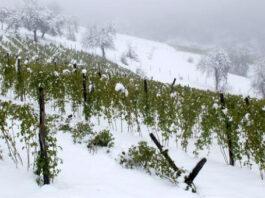 malina pod snegom 02