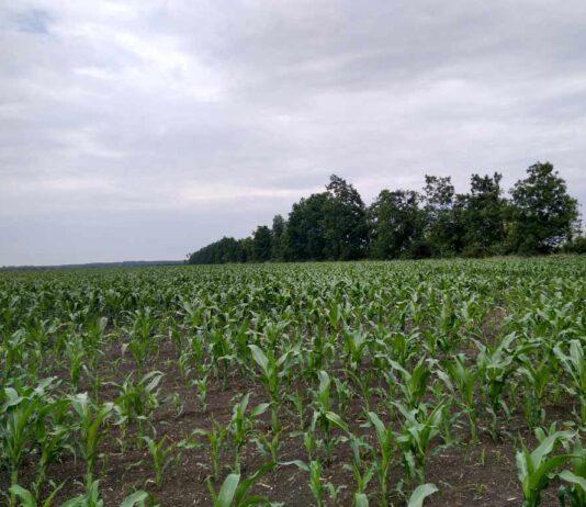 Agrosaveti Galenika fitofarmacija kukuruz 01